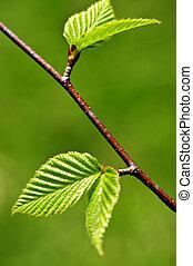 весна, leaves, зеленый