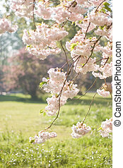 весна, trees, blooming