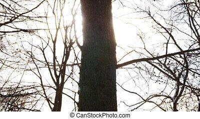 ветви, через, дерево, поломка, зима, солнечный лучик