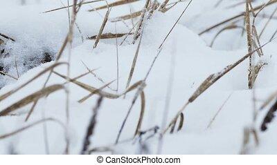 ветер, природа, пейзаж, поле, снег, сухой, зима, трава