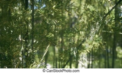 ветреный, бамбук, лесок, 8k, arashiyama, спокойный