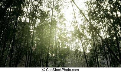 ветреный, лесок, arashiyama, бамбук, спокойный