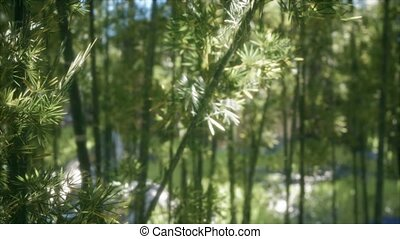 ветреный, лесок, arashiyama, 8k, спокойный, бамбук