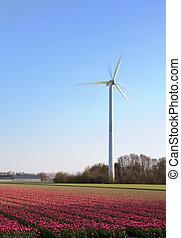 ветряная мельница, tulips, голландия
