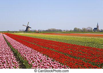 ветряная мельница, tulips, 2