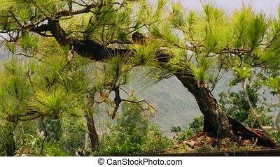 вечнозеленый, гора, лето, дерево, вверх, forest., зеленый, хвойное дерево, ель, закрыть, landscape.