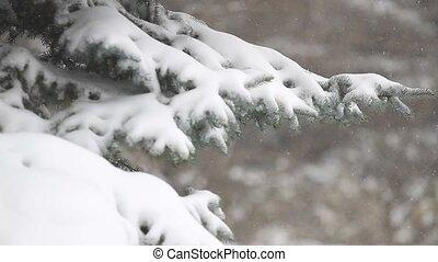 вечнозеленый, лес, зима, дерево