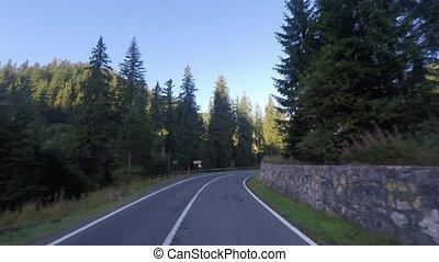 вечнозеленый, лес, driving