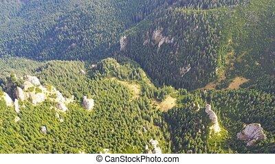 вечнозеленый, viewed, лес, trees, выше
