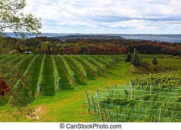 виноградник, поле