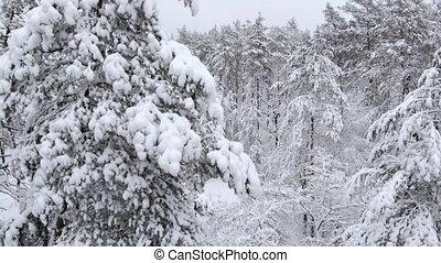 вниз, антенна, pines, зима, movement., лес