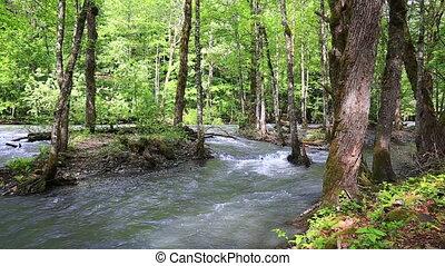 воды, гора, бег, река, лес
