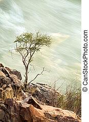 воды, дерево