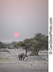 воды, дыра, носорог