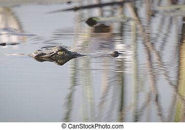 воды, крокодил
