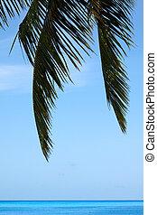 воды, пальма