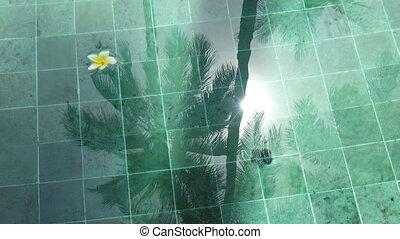 воды, пальма, символ, дерево, солнце, тропический, indonesia., rest-flowers, frangipani, плавающий, bali., бассейн, отражение, мир, спокойствие, (plumeria)