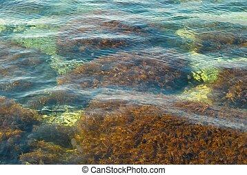 воды, поверхность, driftweed.
