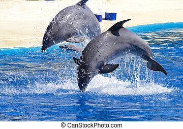 воды, прыгать, дельфин, бассейн, вне