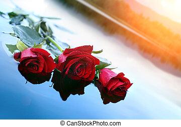 воды, роза