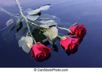 воды, roses