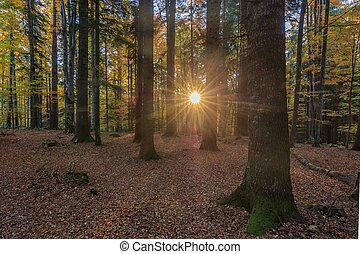 восход, лес