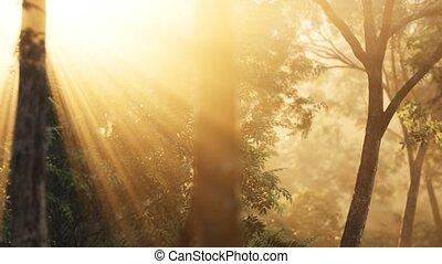 восход, лиственница, солнечный лучик, shadows, лес
