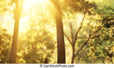 восход, солнечный лучик, лес, shadows, лиственница