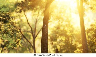 восход, shadows, лиственница, солнечный лучик, лес