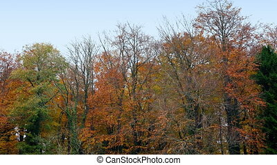 время года, прохождение, лесистая местность, падать