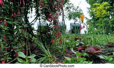 все, цветок, дерево, фуксия, это, возможное, видеть, камера, цветы, марки, sides, движение