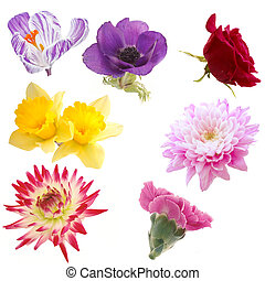 выбор, of, isolated, цветы