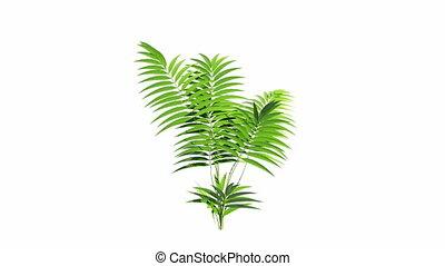 выращивание, альфа, растение, канал