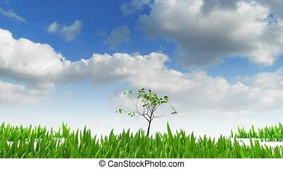 выращивание, дерево
