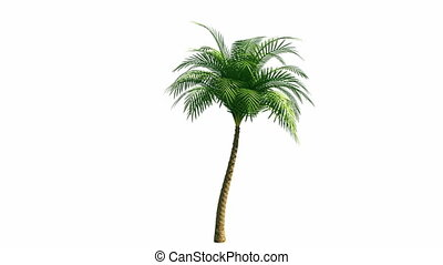 выращивание, пальма, дерево, канал, альфа