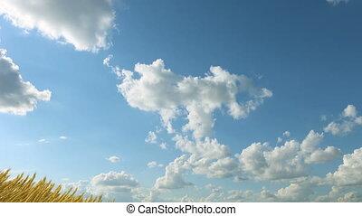выращивание, пшеница, небо, против