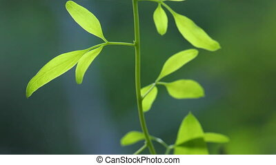 выращивание, растение, молодой