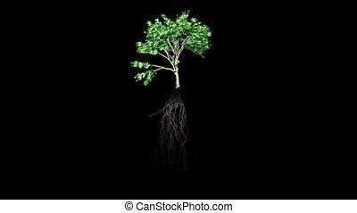 выращивание, растение, 2
