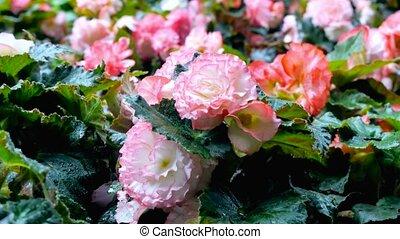 выращивание, цветы, ground., камера, движение, марки, это, возможное, к, видеть, , цветок, на, все, sides, of, , цветок