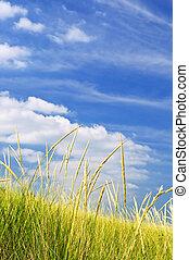 высокий, трава, на, песок, dunes