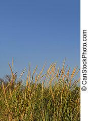 высокий, трава