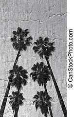 высокий, palms