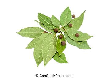 высушенный, бухта, лист, and, гвоздичное дерево, на, ,...