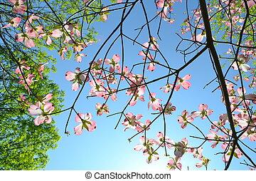 в течение, blossoming, trees, весна