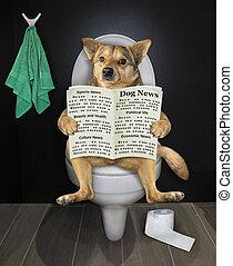 газета, собака, туалет, sits