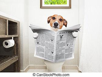 газета, туалет, чтение, собака, сиденье