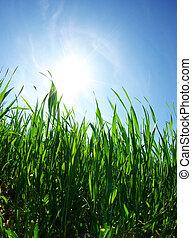 газон, зеленый