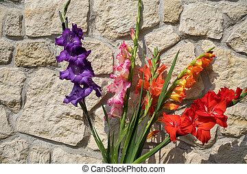 глава, гладиолус, стена, против, цветок, задний план, известняк