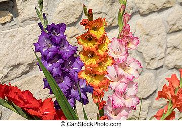 глава, известняк, задний план, против, стена, гладиолус, цветок