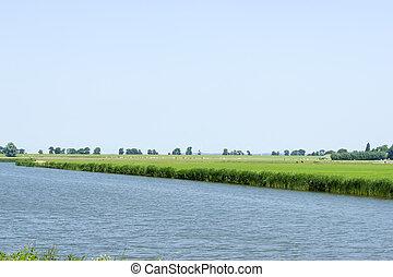 голландский, сельский, овца, река, пейзаж, маленький